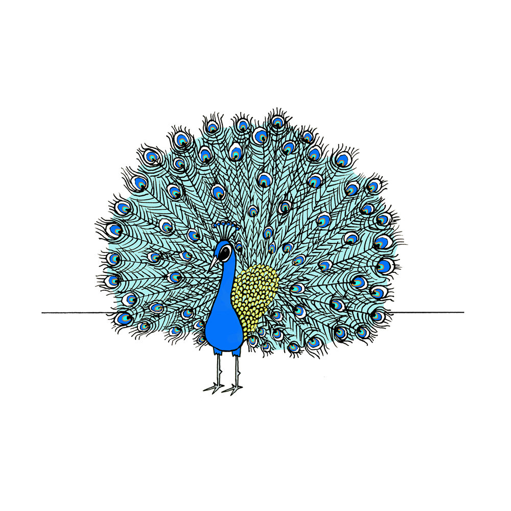 Drawn peafowl pen  print Pen Peacock ink