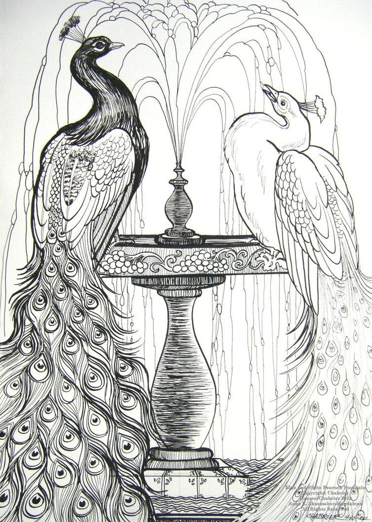 Drawn peafowl pen Ideas Images 3D  >