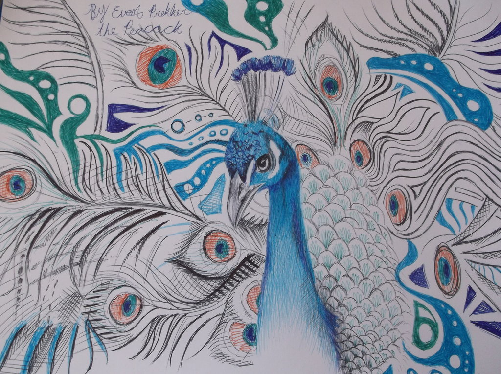 Drawn peafowl pencil drawing Dustywallpaper The Drawings The Peacock