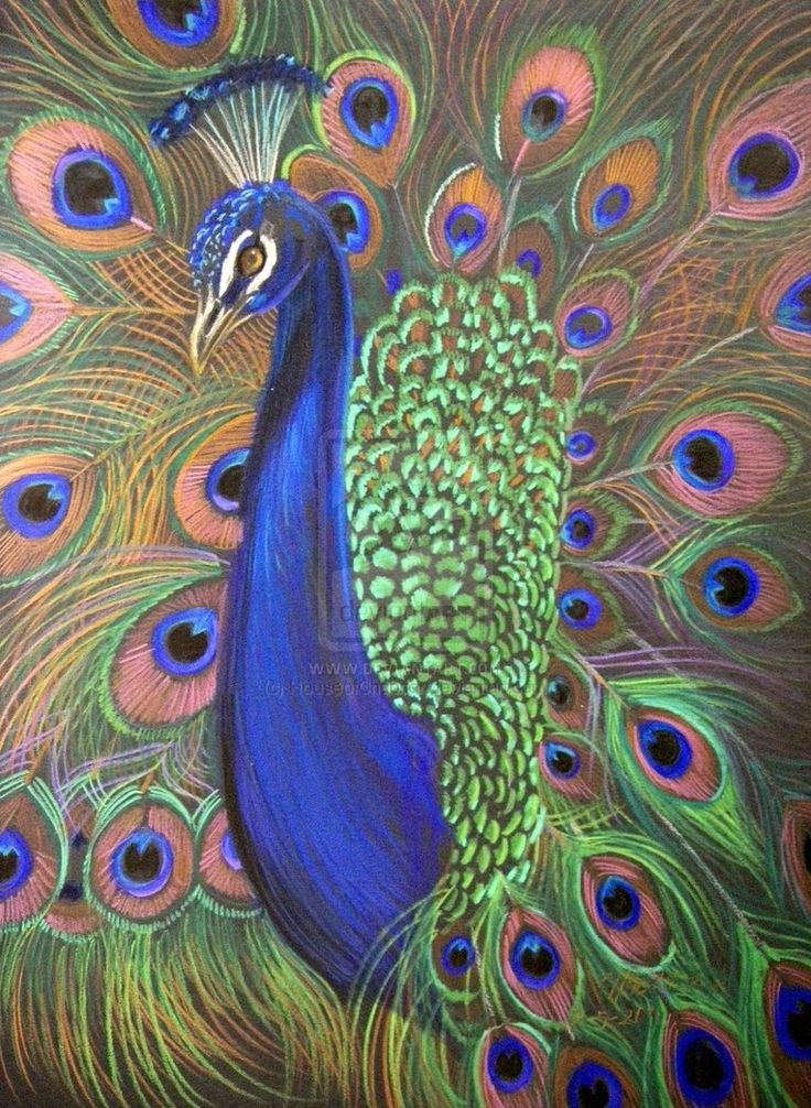 Drawn peafowl pencil drawing Peacock i Drawings Drawing Color