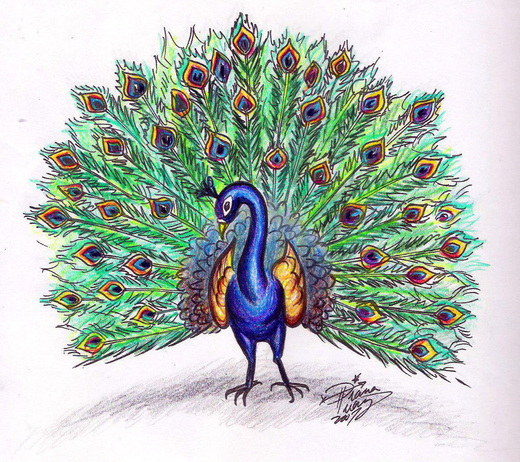 Drawn peafowl pencil drawing Deviantart Draw+a+Peacock+colored+by+Diana com+on+@  Huang
