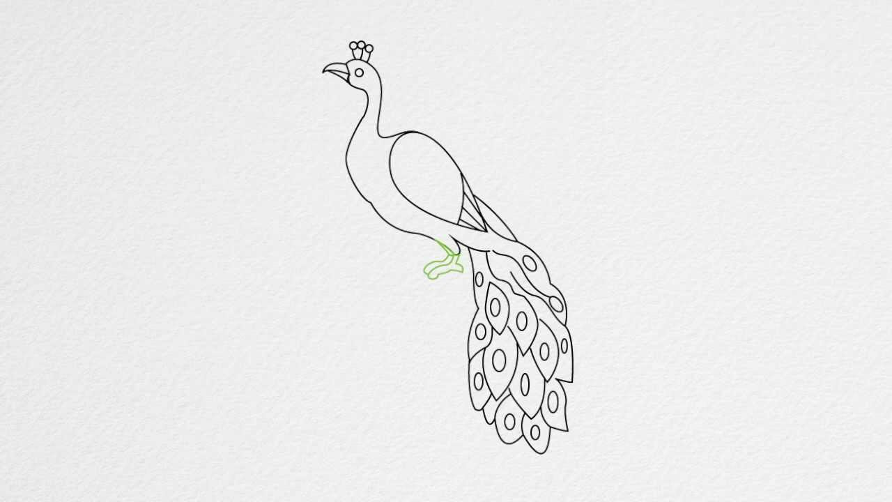 Peacock clipart easy draw How draw step draw to