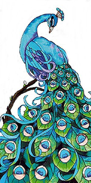 Drawn peafowl pinterest This peacocks Find on on