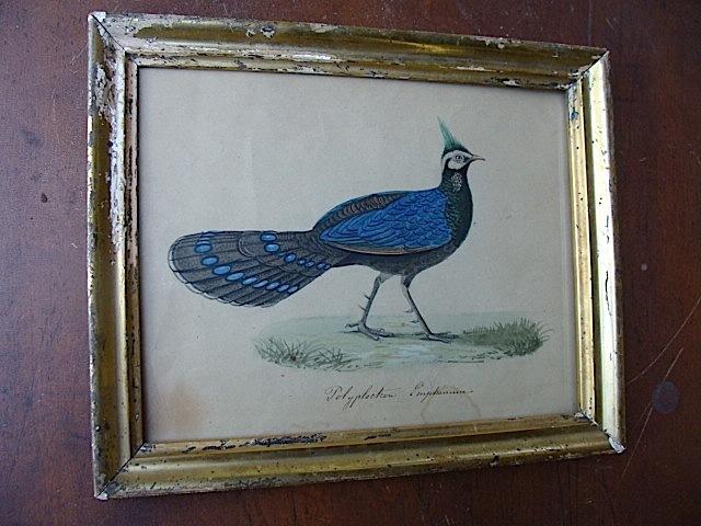 Drawn peafowl pinterest Hand on Drawn Wonderful Peafowl