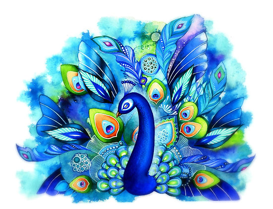 Drawn peacock colour full Colour  Pinterest Google with