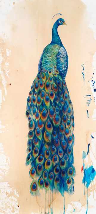 Drawn peacock graphic design Images 100 Watercolor on peacock