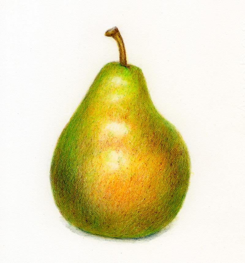 Drawn pear Art Pencil Pear Realistic Drawing