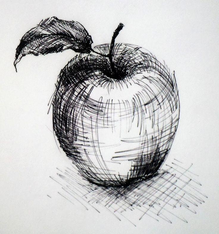 Drawn still life nature Apple SketchNature of Apple hatching