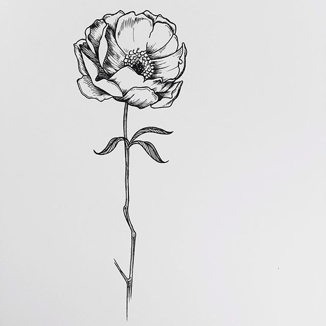 Drawn poppy hand drawn And ideas t drawing Best