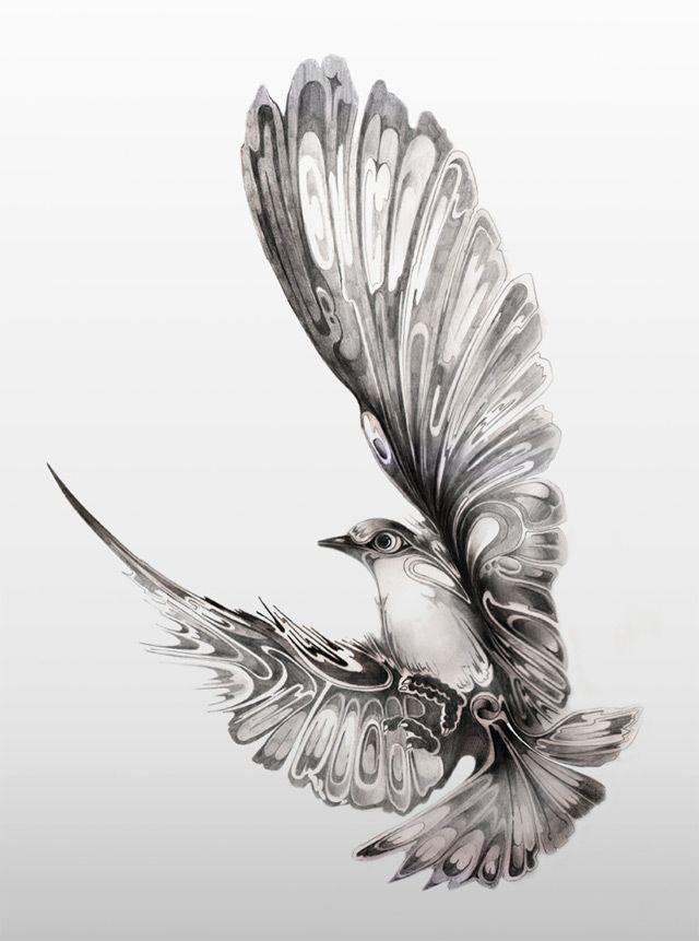 Drawn pen bird Scott Manchester for Pinterest Si