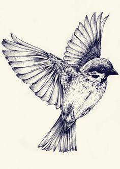 Drawn pen bird B2364ed0bcb2ccc96fcf6ab5adc927f6 ink piksel 500×640 White