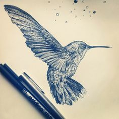 Drawn pen bird Drawing Pen Hummingbird Throated Hummingbird