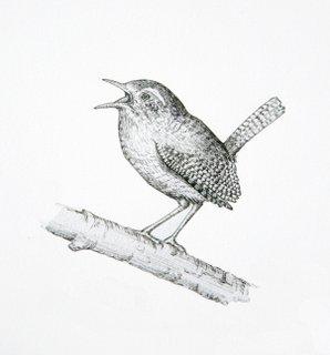 Drawn pen bird Lately; Drawn I've jay pen