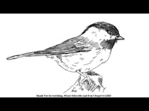 Drawn pen bird YouTube  Bird to How