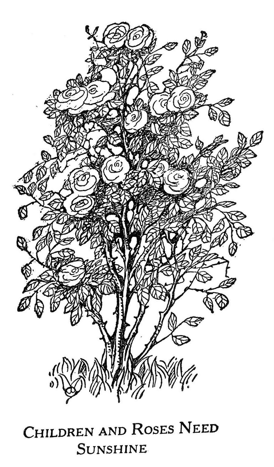 Drawn pen bush Bush Ilustrations & drawing