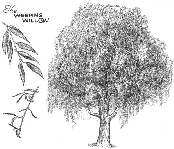 Drawn shrub easy Trees to Drawing Draw Twigs