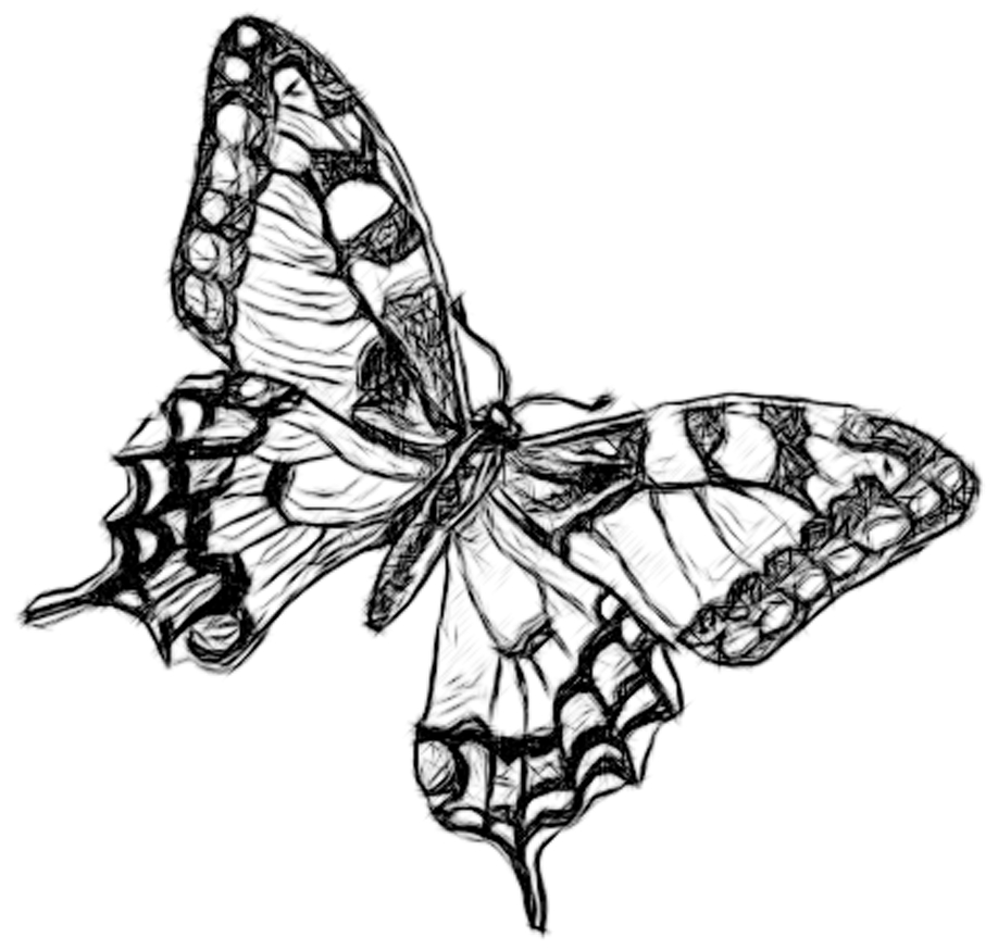 Drawn pen butterfly Drawing Of Of Coloring Butterfly