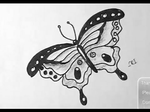Drawn pen butterfly  sketch a How with