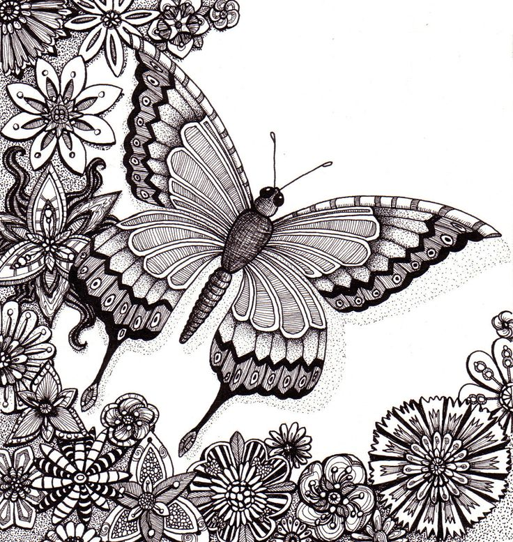 Drawn pen butterfly Butterfly Flutter psychedelic illustration and