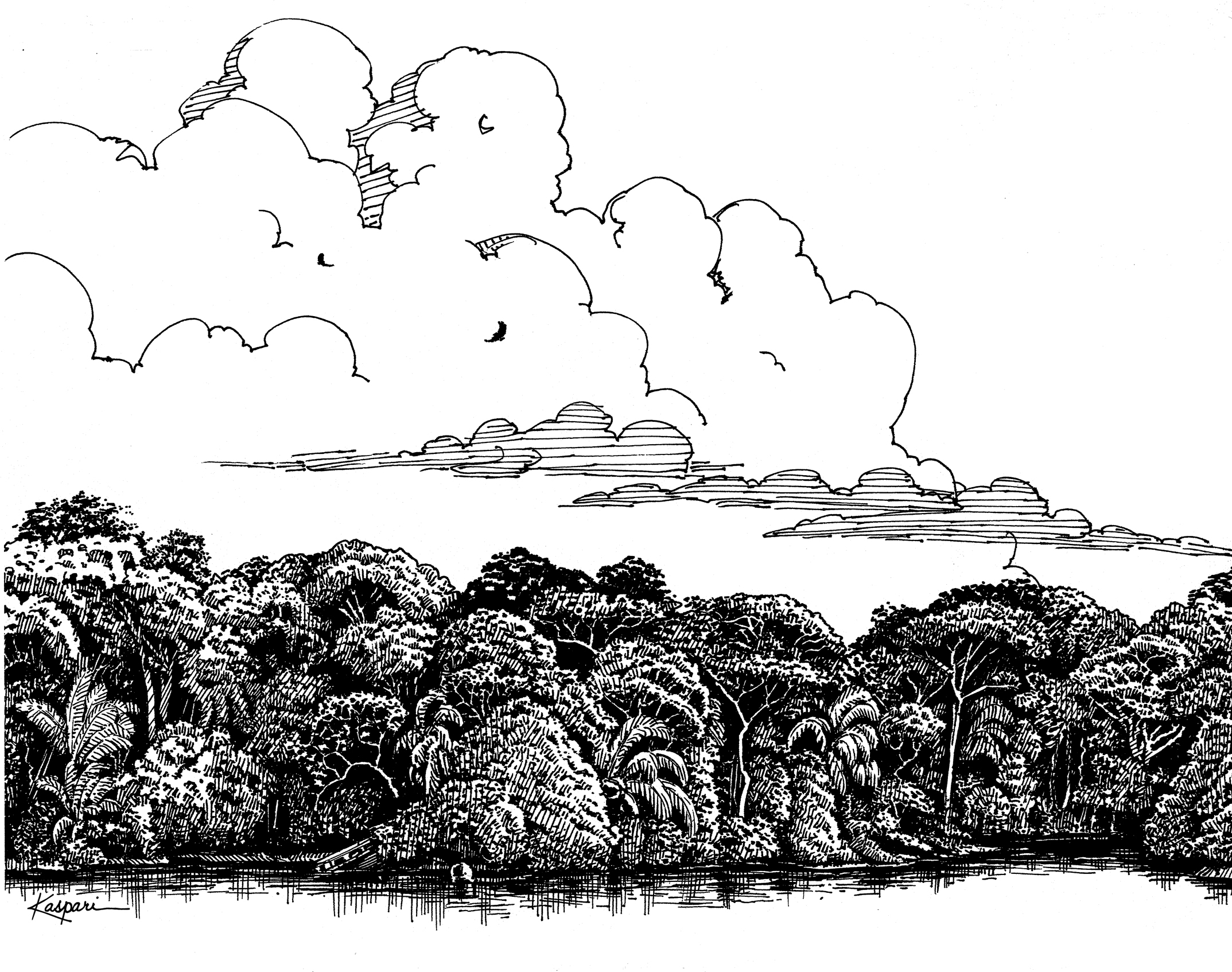 Drawn rainforest pen and ink Ink Pen Original An Drawings