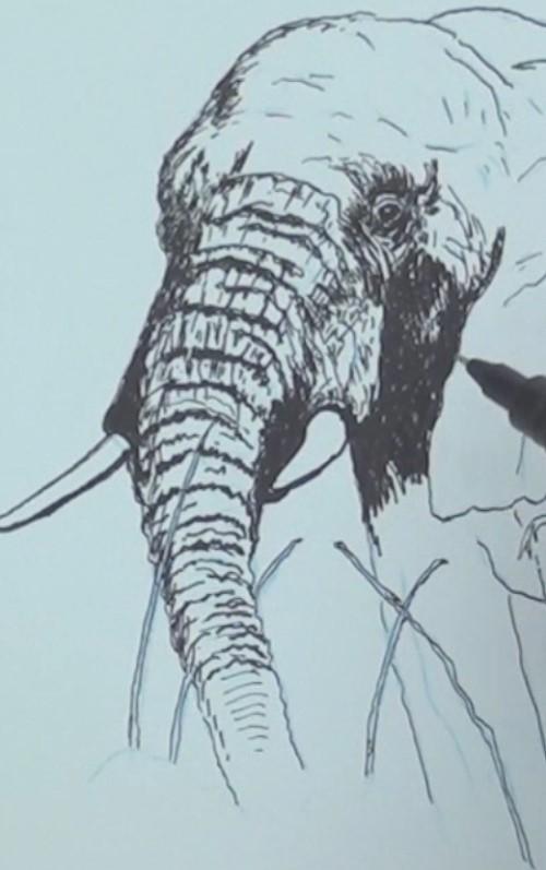 Drawn pen elephant Lessons Draw Art the trunk