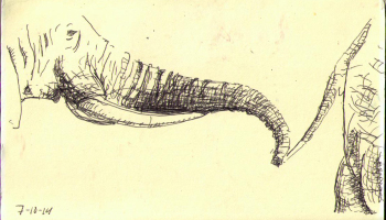 Drawn pen elephant Photo ) a holdning Hands