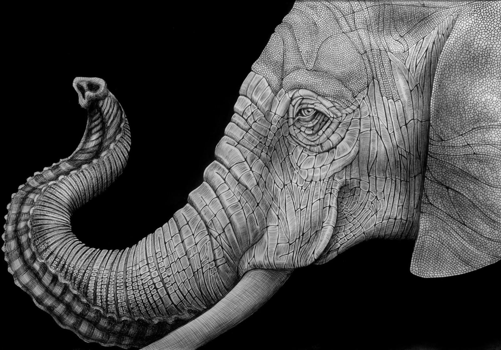 Drawn pen elephant Art: Ink Jeffs  Tim