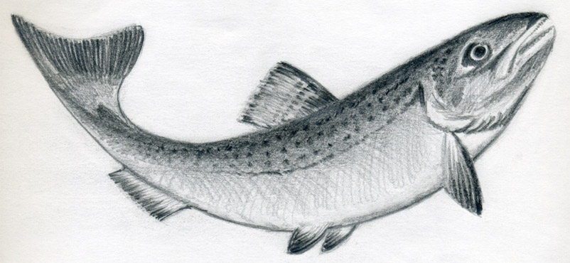 Drawn pen fish A A How To Fish