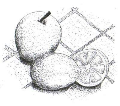 Drawn pen fruit Images about best Pinterest on