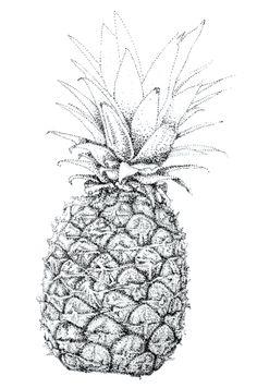 Drawn pen fruit Pinterest sketch draw Things Pineapple