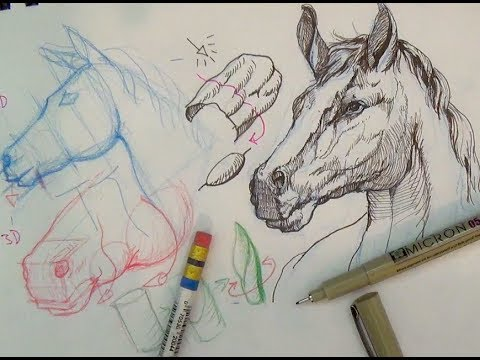 Drawn horse ink drawing Ink draw Tutorials horse a