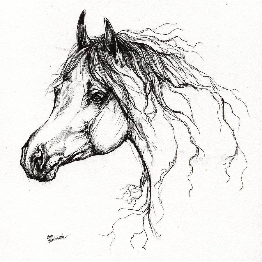 Drawn pen horse Arabian Horse Arabian and Drawing