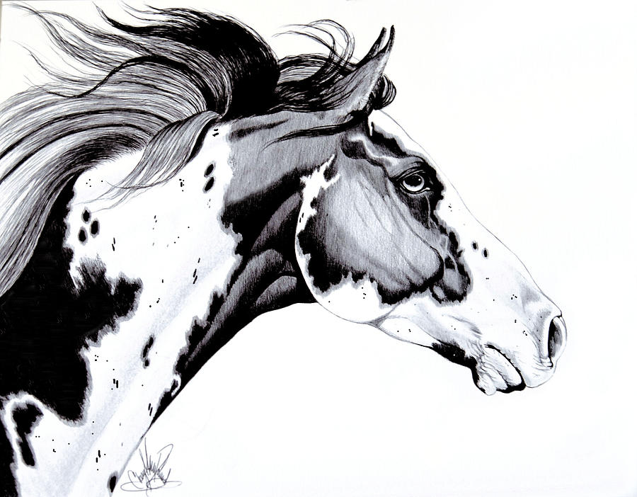 Drawn horse ink drawing Art Horse Heads drawn Horse