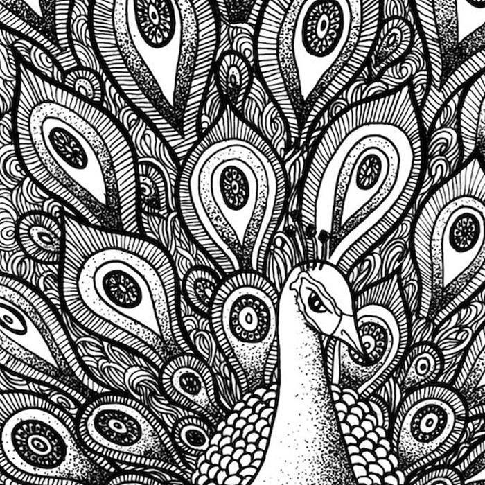 Drawn pen vector Print Artsie Miss Peacock Peacock