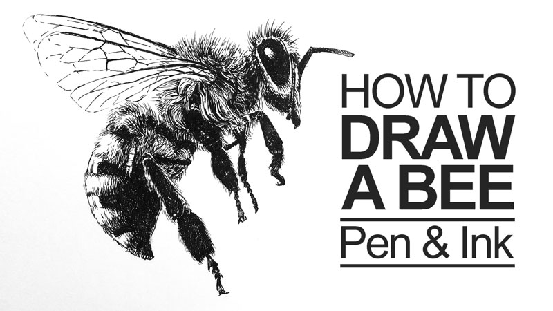 Drawn pen ink drawing  Tutorials Ink Pen and