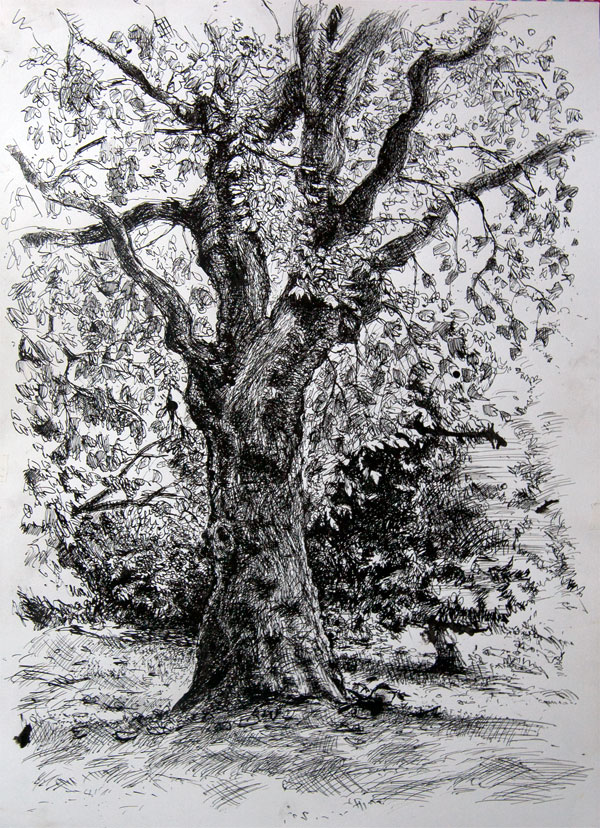 Drawn pen ink drawing Pen tree drawing Pen ink