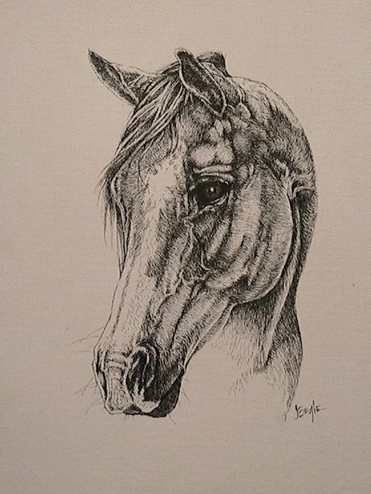 Drawn horse ink drawing In ink 13 11 best