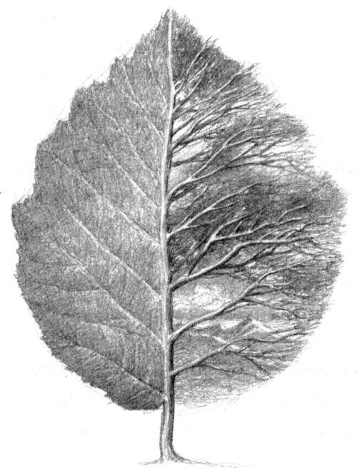 Drawn pen leaf 25+ Pinterest best the Leaf