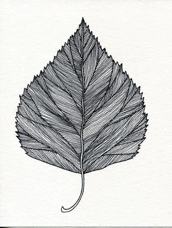 Drawn pen leaf Birch Ink Leaf and