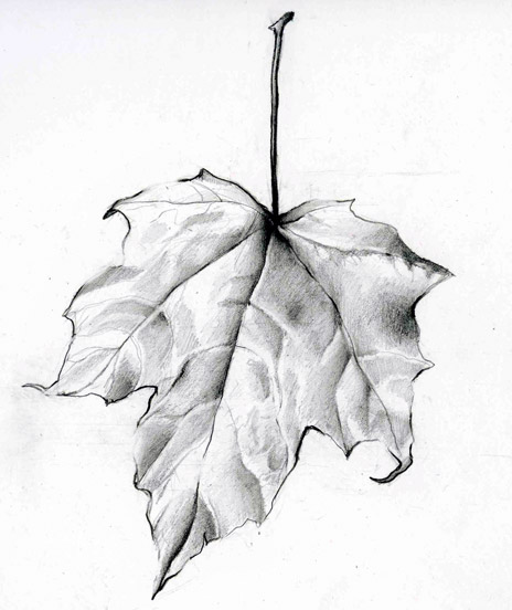 Drawn pen leaf Leaf Drawing Leaf Leaf #1