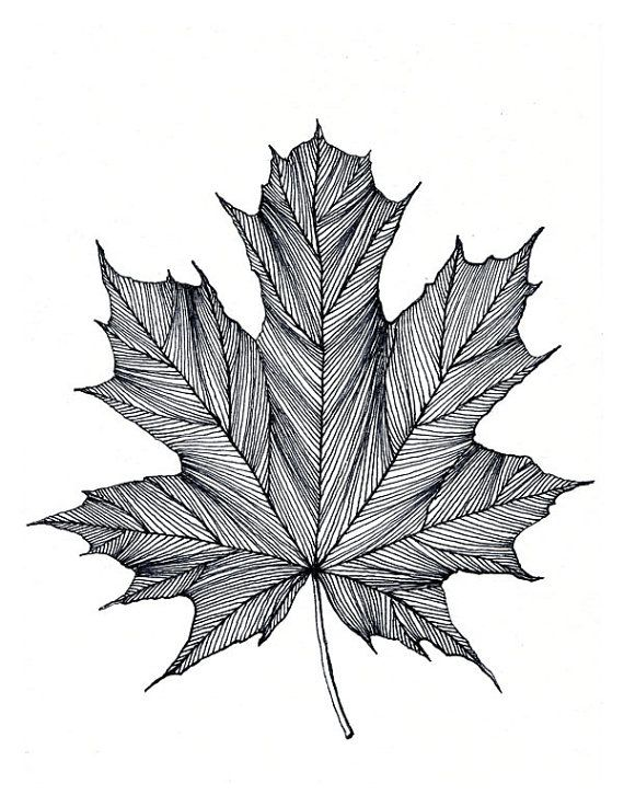 Drawn pen leaf 25+ Black drawing and Pinterest