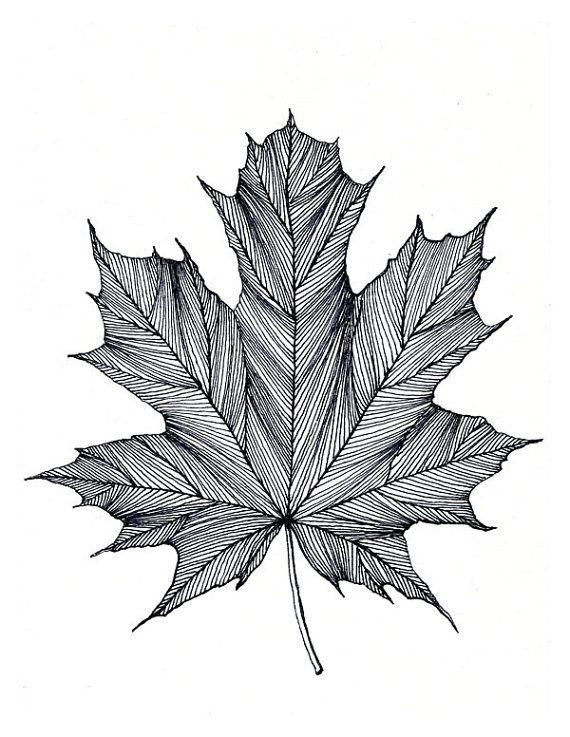Drawn pen leaf 25+ Black or ideas Bigbrainart