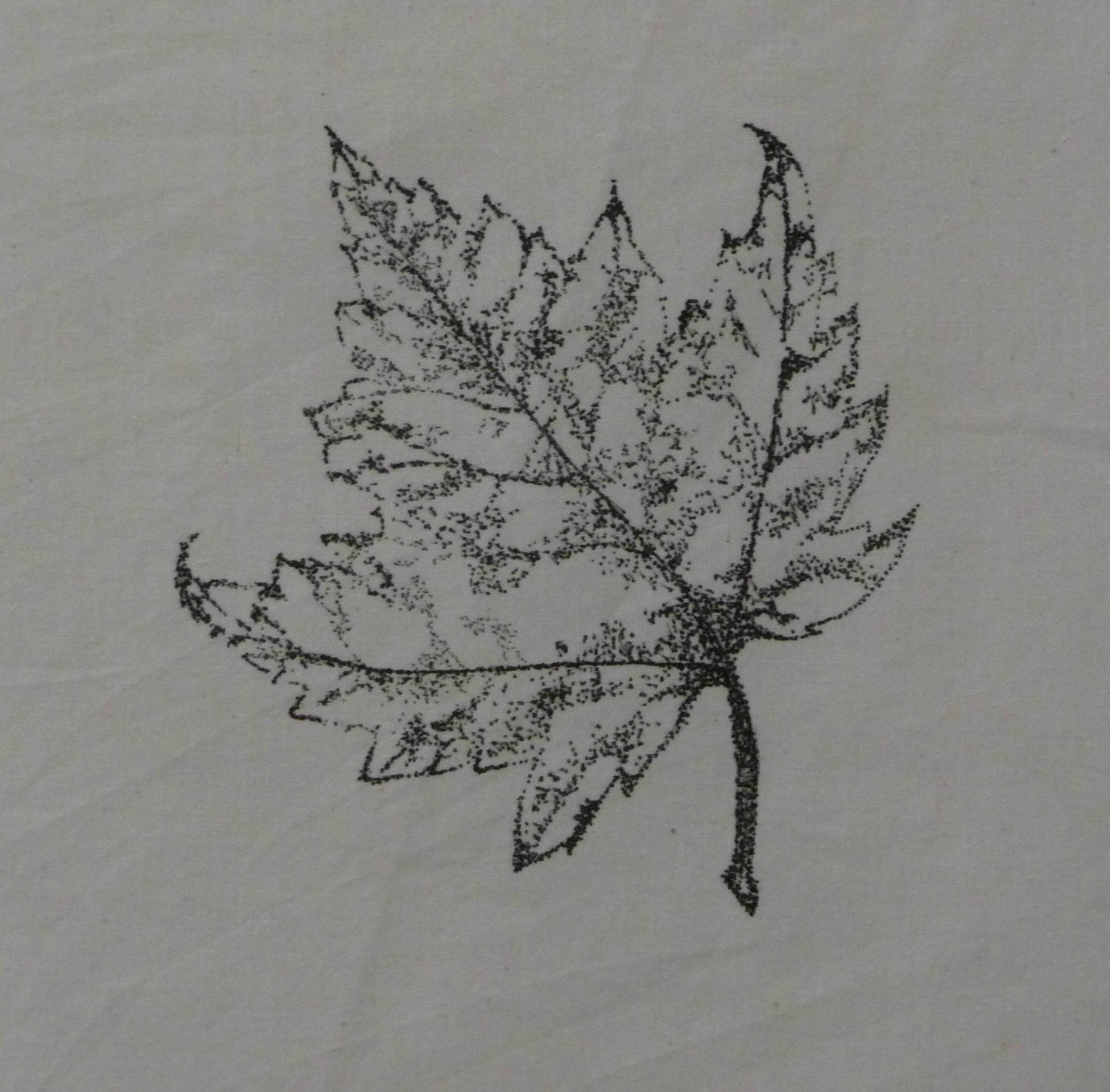 Drawn pen leaf 05 06 & 2010 Leaf