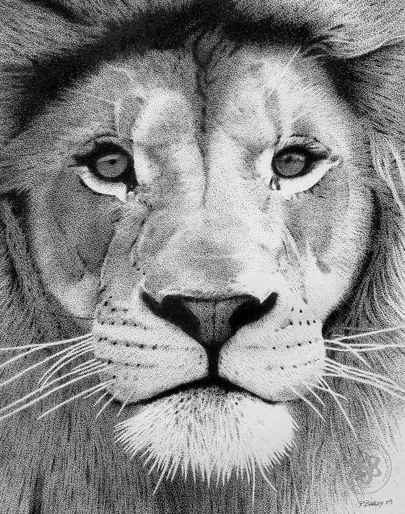 Drawn pen lion Flickr 02 Lion by Pointillism