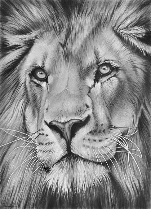 Drawn pen lion Best more Pin Pencil drawings