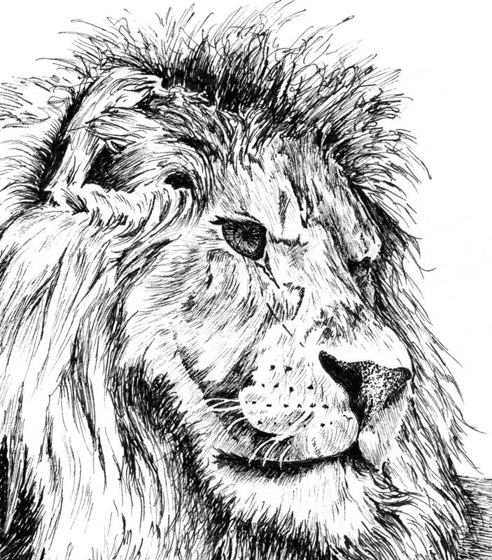 Drawn pen lion August WetCanvas ref Class: painting