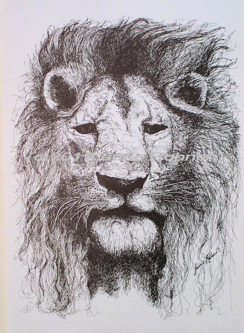 Drawn pen lion Furniture paper Studio and Print