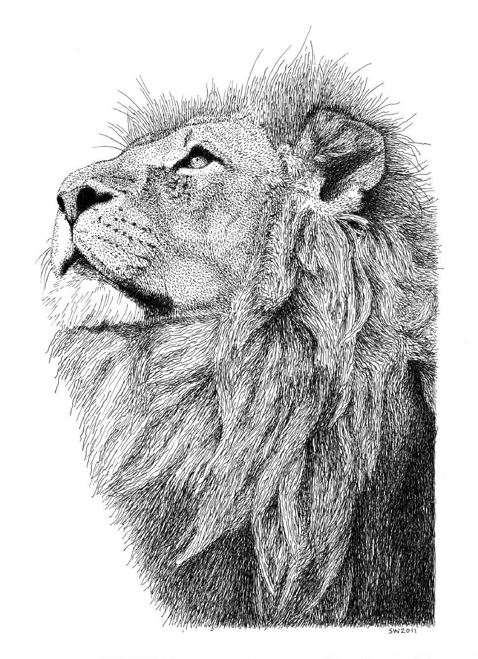 Drawn pen lion Pointillism Drawing/Landscape Ink Pen and