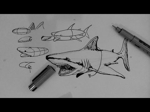 Drawn shark pen and ink Pen and to Pen Drawing