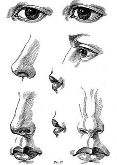 Drawn pen nose Nose Quoted detail http://figure from: